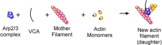 Nucleation Components